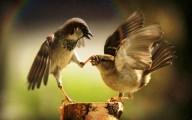 Animals 1, comunicazione